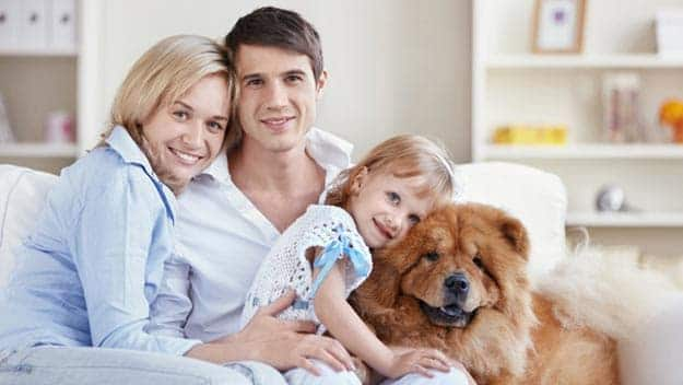 Wills & Trusts dog-young-family Direct Wills Silvertown